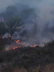 Texas Panhandle Wildfires
