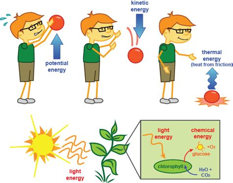 What Kind Of Light Do Plants Need by Biology Order Shmoop Biology
