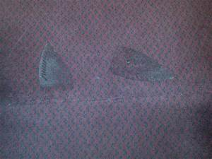 Clothing iron scorch marks all over the carpet - Picture ...