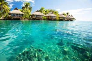blue adventures the best dive travel vacations worldwide south pacific