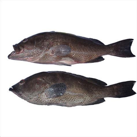 fish grouper taste description