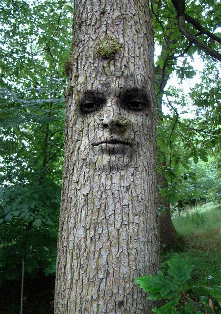 photo tree man face abstract cool  image