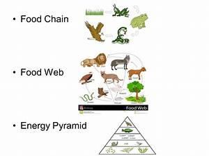 5 Level Food Chain Pyramid | www.imgkid.com - The Image ...