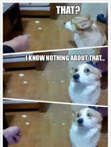 Funny Angry Dog Memes