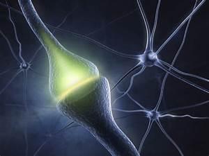 Manipulating Molecules To Make Memories