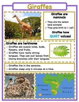 animal fact sheets  carol dysard teachers pay teachers