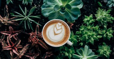 Yet others drew the limit at three. How Much Caffeine Can you Have When Pregnant? - The Fertile Times