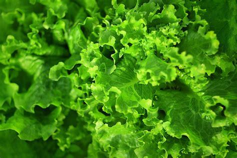 juicer greens leafy