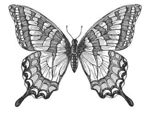 butterfly pencil drawing google search butterflies