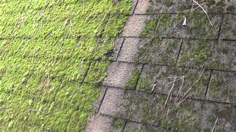 Galvanized Steel Halts Moss On Roof Shingles Carrier Rooftop Hvac Unit Manufacturers Red Roof Plus Washington Dc Alexandria Va Of Flashing Types Pictures What Are The Top Rated Roofing Shingles How To Remove Moss From Tiles Do You Fix A Shingle