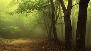 forest landscape 5 HD Wallpaper | Landscape Wallpapers