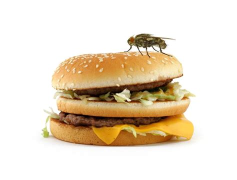 fly cuisines flies sitting on food pixshark com images