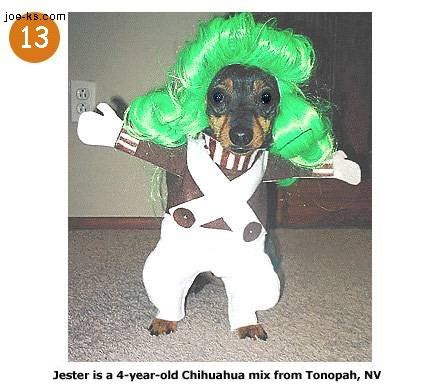 funny image collection funny animal halloween