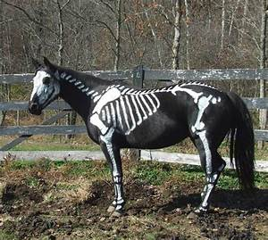 animals transformed into creepy skeletons for