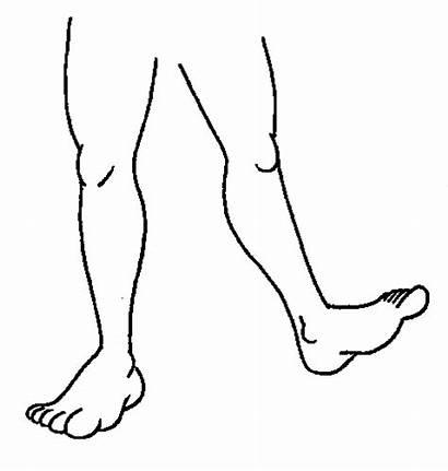 Leg Legs Clip Clipart Cliparts Legged Feet