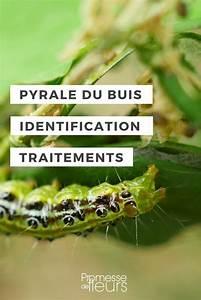 Pyrale Du Buis Traitement Bayer : les 25 meilleures id es de la cat gorie buis sur pinterest ~ Dailycaller-alerts.com Idées de Décoration