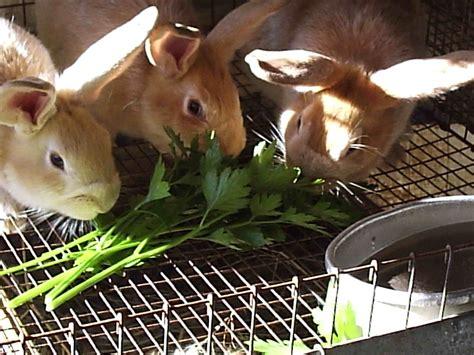 Naturally Feeding Rabbits Rise And Shine Rabbitry