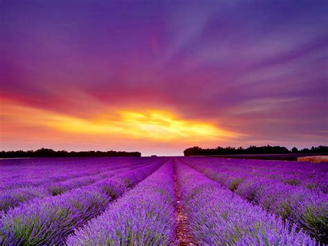 Nature's Beautiful Gifts  Lavender « Que Bella Beauty Of