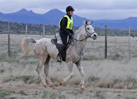 endurance horse horses characteristics riding september racing distance mabruk heart training team perseverance horseback psv hennessy donalyn 80km lungs winner
