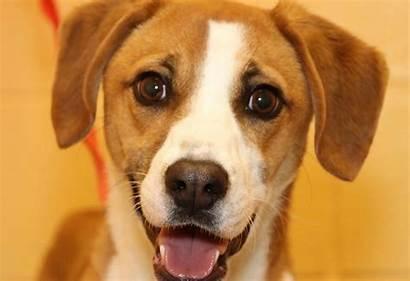 Pets Week Dog Clarksvillenow