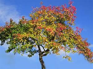 Wann Apfelbäume Schneiden : apfelbaum schneiden herbst apfelbaum im herbst reicher ~ Lizthompson.info Haus und Dekorationen