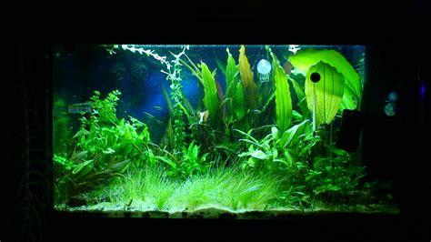 120 litre planted aquarium journal uk aquatic plant society