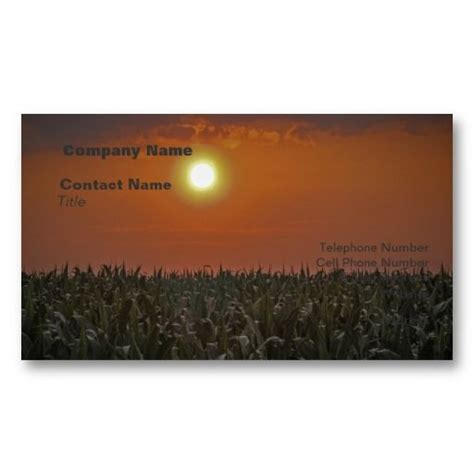 sun   corn field business cards  images