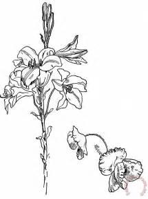 Poppy Flower Line Drawing