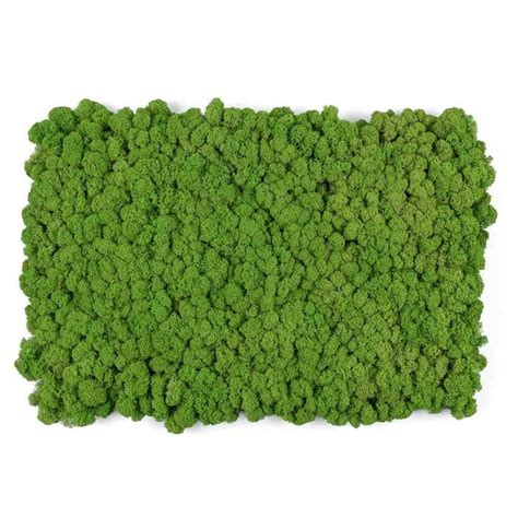 living wall reindeer moss tile green 16x24 mineral tiles