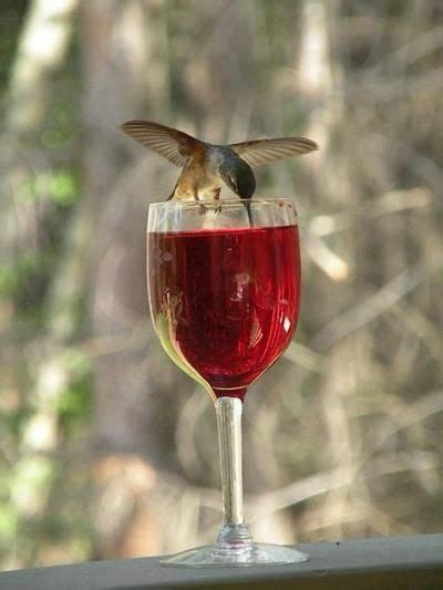 we all need a little drink occasionally beautiful birds