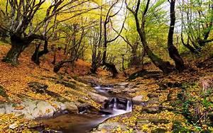 Wonderful, Autumn, Landscape, Forest, Trees, Stream, Fallen