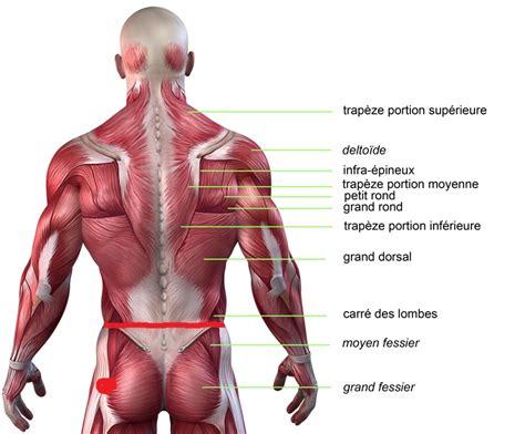 douleur bas du dos fesses cuisses avis forum musclesenmetal