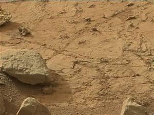 UFO SIGHTINGS DAILY: Iguana Found On Mars By NASA ...