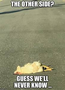 Image tagged in why the chicken cross the road,bad joke ...