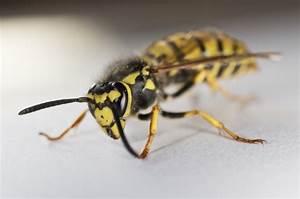 Wespennest Entfernen Vermieter : wespennest weg machen latest mannschaft fahrzeuge with wespennest weg machen cool zwei wespen ~ Orissabook.com Haus und Dekorationen