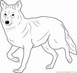Coyote Coloring Coyotes Colouring Printable Cartoon Coloringpages101 Howling Designlooter Template sketch template