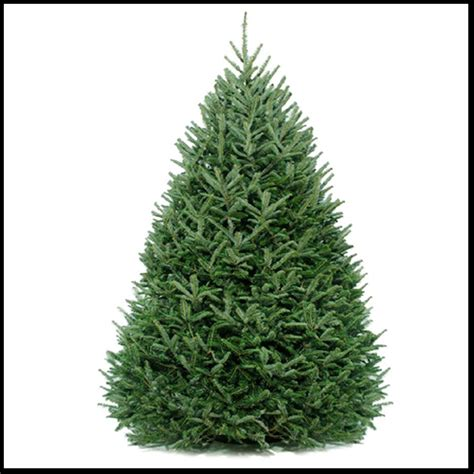 fraser fir live christmas tree christmas tree shop
