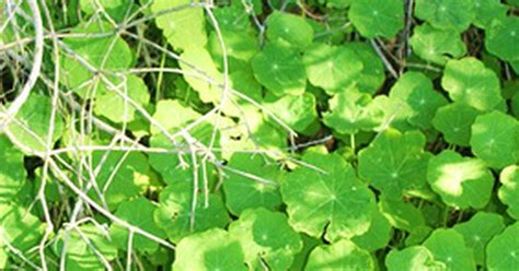 growing ground cover fast growing ground cover plants ehow uk