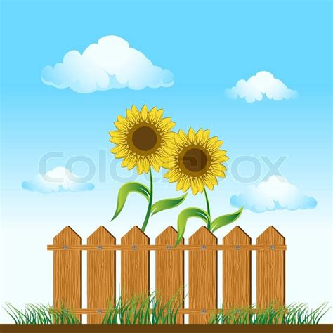 picket fences mord am gartenzaun wooden fence sunflowers on summer meadow stock vector