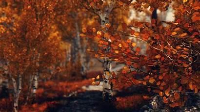 Autumn Aesthetic October Fall Cozy Scenes Normal