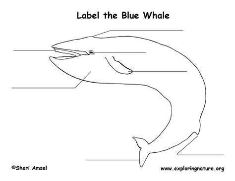 whale blue labeling page