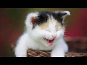 Cute animal sounds – Cute animal compilation - YouTube  Cutest