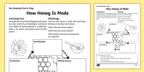 honey   worksheet activity sheet worksheet