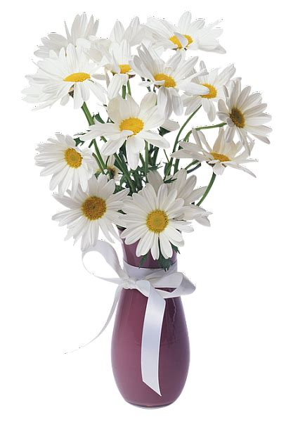 daisies transparent vase bouquet gallery yopriceville high quality images and transparent