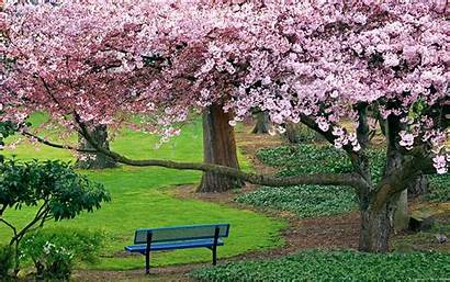 Cherry Blossom Windows Blossoms Lucky Enough Pass