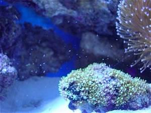 copepods ? - Aquarium Advice - Aquarium Forum Community