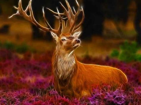3d Animal Wallpapers Free - beautiful frog wallpaper for free beautiful deer