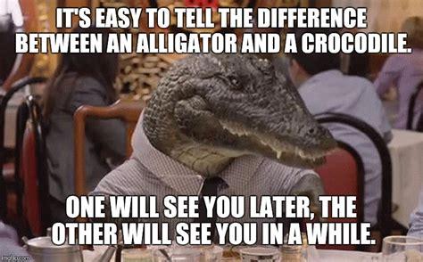Alligator Meme - alligator meme 28 images alligator memes 28 images alligator imgflip alligator florida