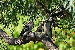 Fauna Of The Australian Capital Territory