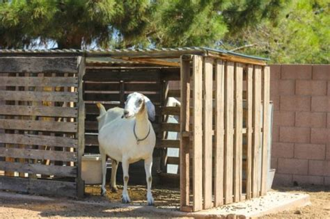 build  goat house learn natural farming